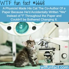 Physicist makes his wife the co-author of a paper - WTF fun fact