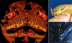 The terrifying 'alien' catfish that has baffled scientists
