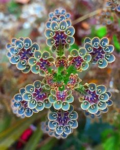 Succulent Mother of thousands Kalanchoe Unusual Flowers, Unusual Plants, Exotic Plants, Cool Plants, Amazing Flowers, Beautiful Flowers, Weird Plants, Rare Flowers, Cool Flowers