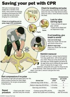 CPR for animals. Good to know!
