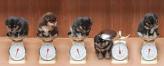 Photo by Jenny Duckworth Photography Cat Food, Dog Cat, Pets, Sweet, Photography, Animals, Cat Feeding, Candy, Photograph