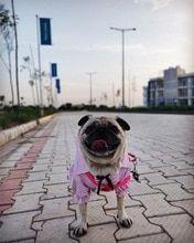 Tienda Online Pipifren Verano Perros Camisetas Coloridas Primavera