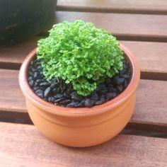 Why not start your own bonsai garden using our Terracotta Pots?