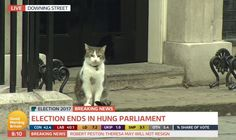 "Good Morning Britain Twitterissä: ""BREAKING NEWS: Larry the cat is currently standing outside of number 10 Downing Street prepared to make a statement ... CAPTION THIS #GE2017 https://t.co/lciocZkSHM"""