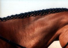 Cool, lacey effect! http://suzannewinfield.hubpages.com/hub/Show-Horses-and-their-Beautiful-Braids