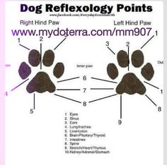 Doterra for dog's. Learn how to heal your pet naturally with Essential oils that have been around for thousands of years.: Doterra for dog's. Learn how to heal your pet naturally with Essential oils that have been around for thousands of years. Essential Oils Dogs, Doterra Essential Oils, Yl Oils, Young Living Oils, Young Living Essential Oils, Reflexology Points, Baby Reflexology, Oils For Dogs, Pet Care