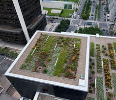 L'avenir des toits verts incertain au #Québec