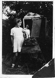 rabbit photo 1940 - Google Search