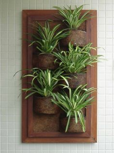 New Wall Plants Diy Terrarium Ideas Indoor Garden, Garden Pots, Indoor Plants, Outdoor Gardens, House Plants Decor, Plant Decor, Vertikal Garden, Terrarium Diy, Deco Floral