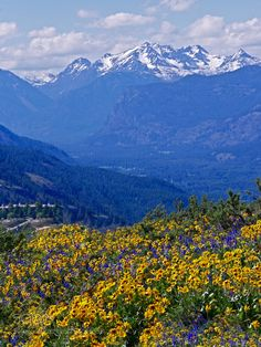 """chaehbae: """" New on : Balsam Root and Snowcapped Mountains by -Aquamarine- by -Aquamarine- Spring flowers on Patterson Mountain. Arnica Montana, North Cascades, Photos Of The Week, Landscape Photography, Travel Photography, Spring Flowers, Perennials, Tourism, Mountains"""