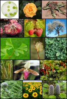22 de mayo: Dia Internacional de la Diversidad Biologica