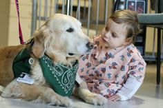 Hospital Therapy Dog by Reggie the Service Dog, via Flickr