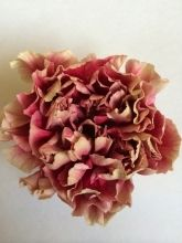 Carnation, Merletto - Wholesale Flowers for weddings and events – Wholesale Florist – Floral, Floral Supply, Flower Distributor Diy Wedding Bouquet, Diy Wedding Flowers, Green Wedding, Diy Flowers, Wedding Flower Packages, Wholesale Florist, Flower Packaging, Burgundy Flowers, Floral Supplies