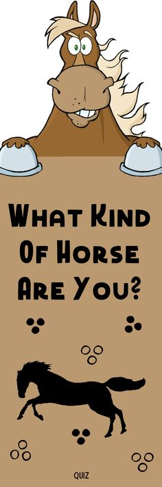 From the mighty shire horse to the ballsy little Shetland pony to the almost impossibly beautiful palomino, every horse breed has its own quirks and characteristics. Tell us a little about you, and we'll tell you which one is best matched to you! Funny Animal Memes, Cute Funny Animals, Cute Baby Animals, Animals And Pets, Funny Memes, Hilarious, Funny Horses, Funny Dogs, Cute Dogs