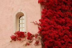 The Brightest Bougainvillea- became obsessed with this tree in Jamaica.