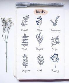 Bullet journal plant drawing ideas, Basil drawing, Olive drawing, Rosemary drawing, Mint drawing, Sage drawing, Thyme drawing, Oregano drawing, Dill drawing, Parsley drawing.   @kawariisjournal