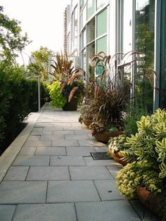 City Townhouse - contemporary - landscape - vancouver - by Glenna Partridge Garden Design