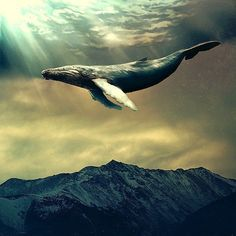 VK is the largest European social network with more than 100 million active users. Ocean Art, Ocean Life, Space Whale, Giant Animals, Whale Tattoos, Whale Art, Whale Song, Wale, Matte Painting