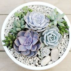 Looking for a way to complete any small space of your landscape? Recreate this super trendy pot of succulents with just a few quick and easy steps. This potted perfection will keep any space looking fresh and updated.