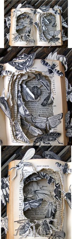 Kelly Campbell, Mayberry's Insects, art, sculpture, paper craft, book art, book sculpture  This image is disorder where the pages of a book are ripped up to allow hated insects to crawl over them. The book looks like it has been taken over by bugs