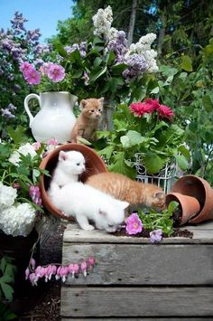 Kitty potting table in the Flower Garden..