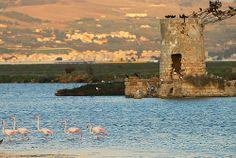 Saline di Trapani e Paceco, Sicily 102