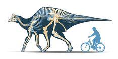 Coahuila Dinosaurs, Mexico Desconocido Magazine. Velafrons coahuilensis skeletal reconstruction. Art by Román García Mora.