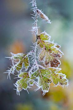 Frosty the leaves by Jacky Parker on 500px