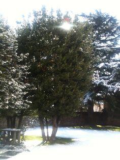 Il sole che scioglie la neve di ieri... sun is smelting the snow of yesterday