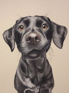 Items similar to Pastel Pencil Drawing Dog Portrait on Etsy Realistic Animal Drawings, Cool Art Drawings, Amazing Drawings, Colorful Drawings, Drawing Faces, Dog Pencil Drawing, Girl Drawing Sketches, Pencil Art Drawings, Drawing Tips