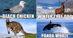 "Sometimes you wonder what people were thinking of when they named animals. Take ""manta ray"" for instance. What even is that? It's just a collection of sounds. But, if it had been named ""majestic sea flap flap"" then people would get the idea as soon as they heard its name. So, check out these 26 hilariously accurate new names for various animals."