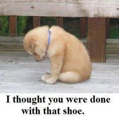 """""""I thought you were done with that shoe.....""""  Poor little thing."""