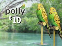 Perfect Polly | Official Site | Lifelike Bird Gives The Joy Of A Pet Without The Work!
