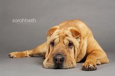 sarahbethphotography.com