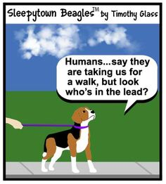 Sleepytown Beagles