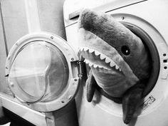 Shark in the washing machine. by Samain on DeviantArt Shark Bait, Shark Shark, Shark Plush, Shark Tooth, Baby Shark, Sneak Attack, Great White Shark, Shark Week, Scubas