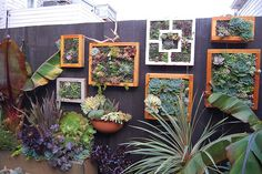 Succulent fence | Flickr - Photo Sharing!