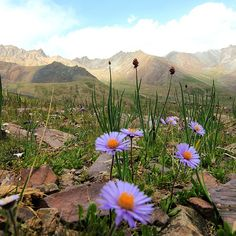 #mountains #flowers #Kyrgyzstan #expedition #climb #trek #landscape #views #photography #travel #nature