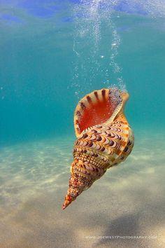 Joe West Photography sea shell