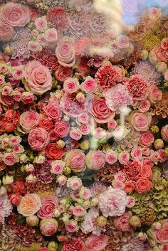 Rose bouquet - In the Christian Dior Window Display My Flower, Pretty In Pink, Beautiful Flowers, Flower Wall, Colorful Roses, Pink Flowers, Pink Roses, Art Flowers, Rosa Rose