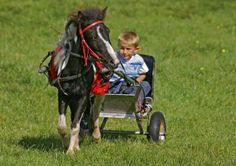 Traveller Boy with Pony and Miniature Cart  Copyright granted for educational purposes by photographer John Band.