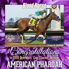 Congratulations to Triple Crown Champion American Pharaoh and his connections!!!!! Happy Retirement!!!!