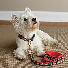 Go out for a walk in style with this festive dog leash!