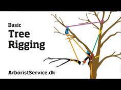 Tree Rigging Techniques - Baum Rigging - Nedfiring fra træ - YouTube