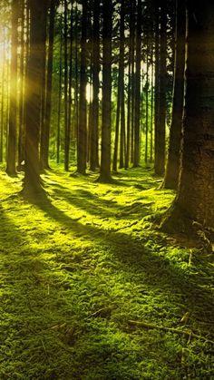 Forest Wallpaper, Nature Wallpaper, Amazing Wallpaper, Iphone Wallpaper, Forest Pictures, Nature Pictures, Forest Photography, Landscape Photography, Painted Horses