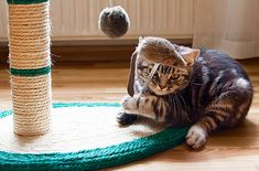Secrets to a happy indoor cat!   Indoor cats need stimulation, but you can provide that for them in the house. Veterinarian Dr. Marty Becker offers 5 tips for keeping indoor kitties happy.