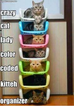 Organizational skills....searching pintrest for organizing ideas...just came across this pin...to funny...great for the OCD crazy cat lady's(or men) out there.