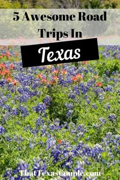 5 Awesome Road Trips in Texas - That Texas Couple Usa Travel Guide, Travel Usa, Travel Guides, Travel Tips, Travel Destinations, Us Road Trip, Road Trip Hacks, Visit Texas, Visit Usa