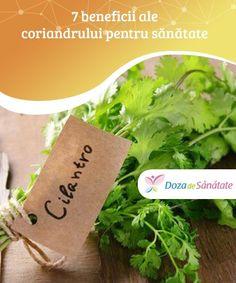 Parsley, Cilantro, Herbs, Health, Food, Plant, Health Care, Essen, Herb
