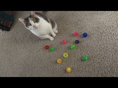 The 12 days of Catmas video